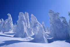 樹氷 (Snow at Zao Park, Japan)