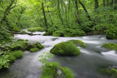 清流 (River in Akita Prefecture, Japan)